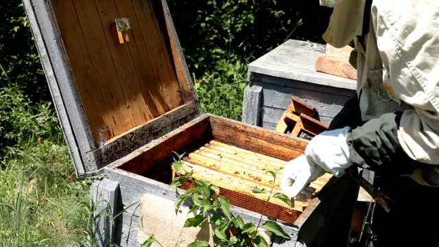 Beekeeper working in apiary among a swarm of bees video