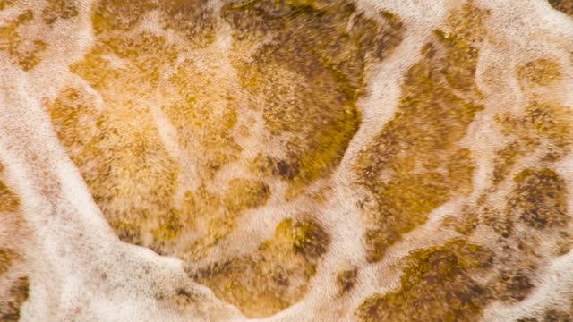 birra bere bolle e froths - fermentare video stock e b–roll