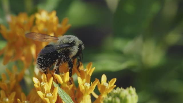 Bees and butterflys pollinate flowers in a garden.