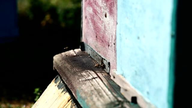 bin vid främre hive entré. slow motion. - djurlem bildbanksvideor och videomaterial från bakom kulisserna