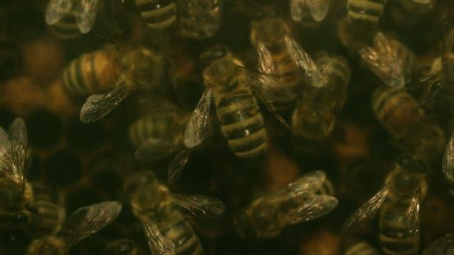 Bees Crawl Around Honeycomb
