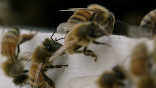 Bees Crawl Around video