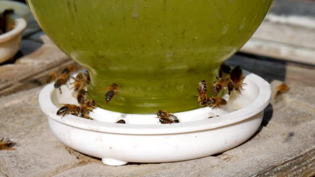 bees drinking water bee macro bee on the water. - tap water filmów i materiałów b-roll