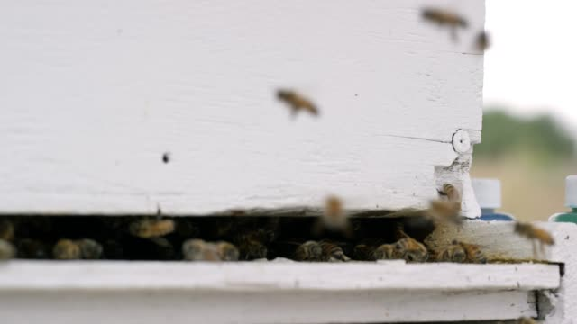 Bees Fly around a Beehive video