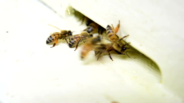 Bees fly from beehive Bees fly from beehive arthropod stock videos & royalty-free footage