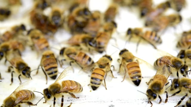 Bees fly from beehive video