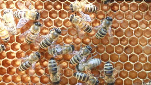 bees inside hive video