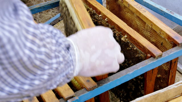 Bees on bee frames close up summer time video