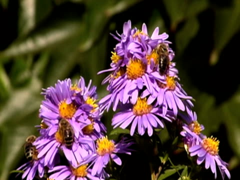 api a fiori ntsc - stame video stock e b–roll