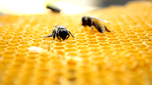 bees auf honeycells - biene stock-videos und b-roll-filmmaterial