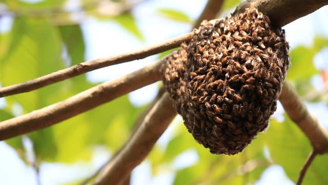 bienen auf honeycomb - nest stock-videos und b-roll-filmmaterial
