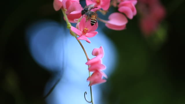 Bees on pink flower.