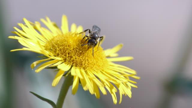 Bees take nectar video