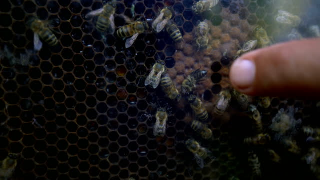 bees with beehive - ape regina video stock e b–roll