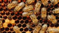 istock Bees work on honeycomb with honey, processed pollen in honey 595946866
