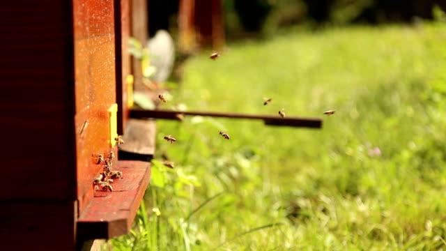 stockvideo's en b-roll-footage met bees working in the hive - vachtpatroon