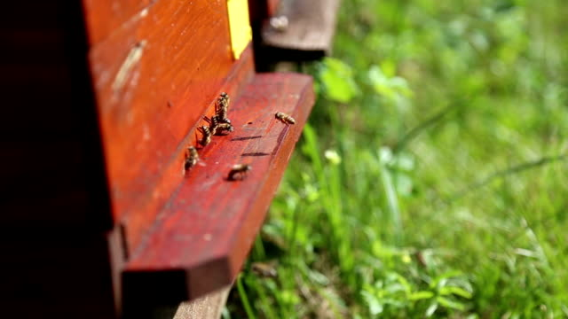 bees working in the hive bee outside the hive in a bee animal markings stock videos & royalty-free footage
