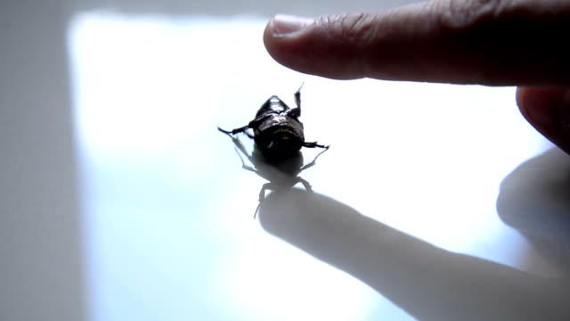 Beetle bug video