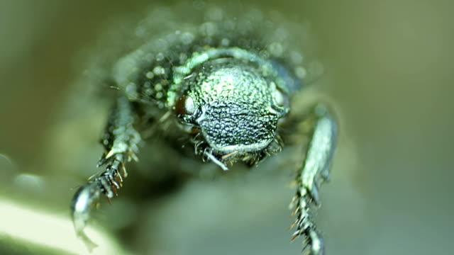 甲虫クローズアップ ビデオ