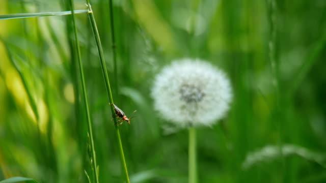 Käfer auf dem Rasen. – Video