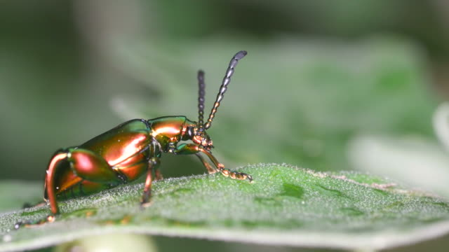 beetle resting on the leaf video