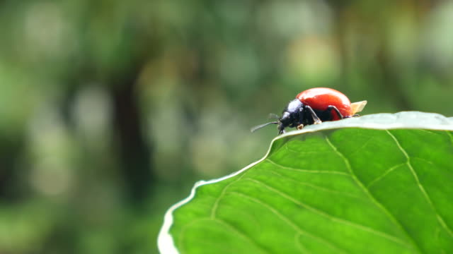 beetle stay in the plant leaf video