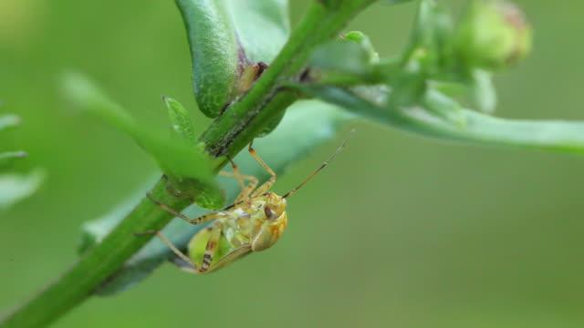 stockvideo's en b-roll-footage met beetle - arthropod