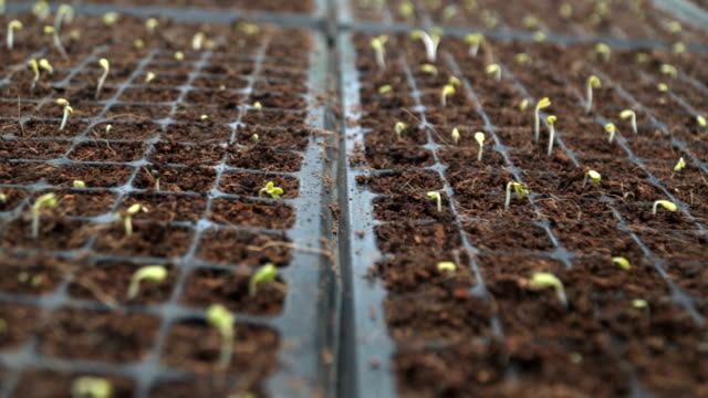 begining life in rows video
