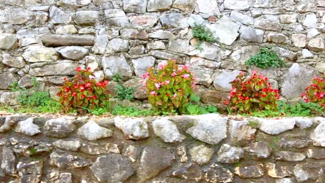 壁に並ぶベゴニア。石の壁のベゴニア植物。岩の間にベゴニヤがあった。 - 石垣点の映像素材/bロール