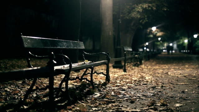 bench, walking park, strong wind, night, rain - садовая скамья стоковые видео и кадры b-roll
