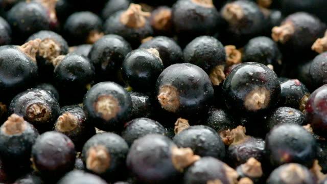 berries of blackcurrant video