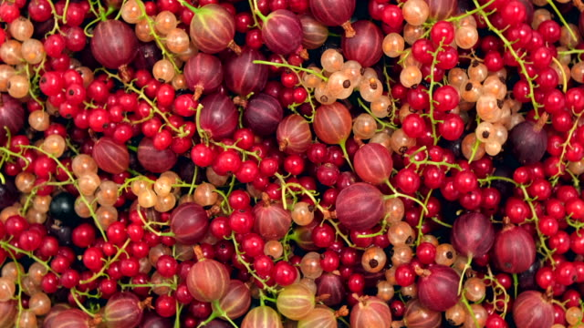 berry organic fruits rotation background. raspberries, gooseberries, red, black and yellow currants. various of many fresh ripe berries - ribes rosso video stock e b–roll
