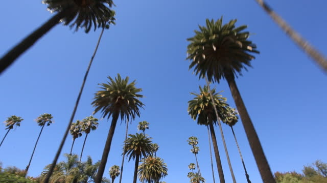 Beverly Hills - HD Video video