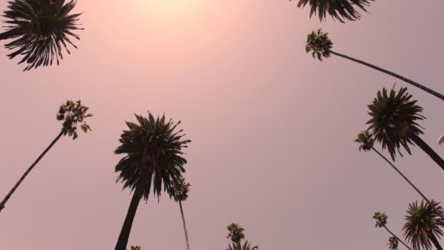 beverly hills palmen - 4k - palme stock-videos und b-roll-filmmaterial