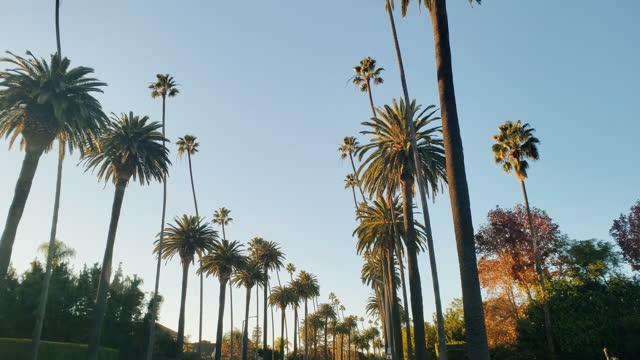 vidéos et rushes de palmiers et maisons de beverly hills - arbre tropical