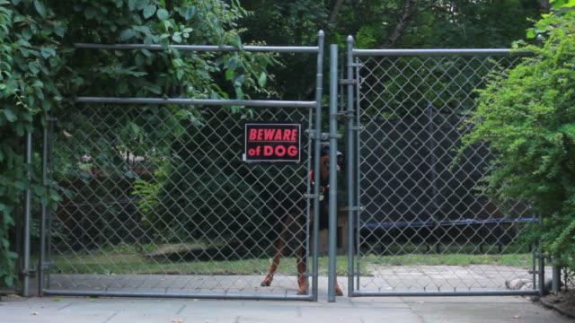 Beware of dog, doberman video