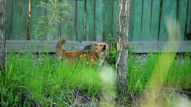 attenzione ai cani - cane addestrato video stock e b–roll