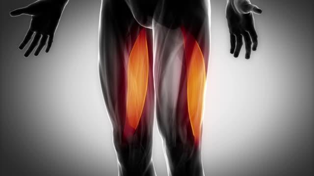 上腕二頭筋大腿-筋肉部位にブラック - 人の筋肉点の映像素材/bロール