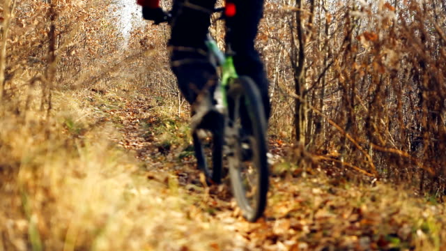 Bicycle cycling in forest video