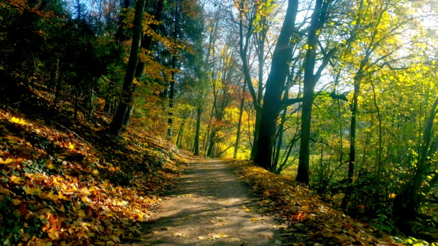 Bicycle Ride in Colorful Autumn Forest Cycling point of view shot footpath stock videos & royalty-free footage