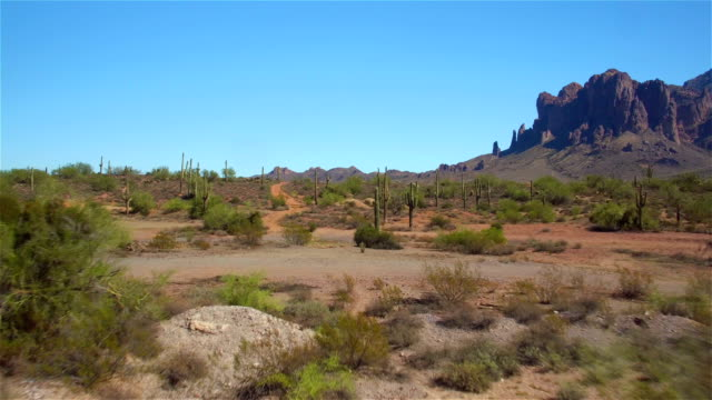 AERIAL: Big beautiful cactuses in vast desert under rocky mountains video