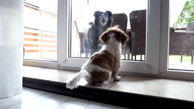 大きな黒い犬が家にあるドロップを望んでいます。 - 愛玩犬点の映像素材/bロール