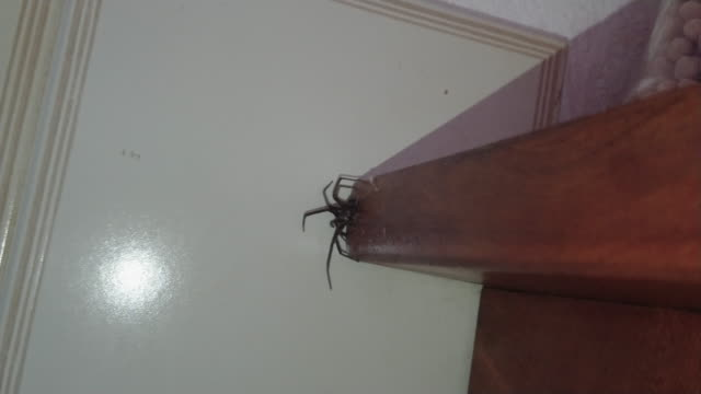 big black spider in the kitchen with spider web big black spider in the kitchen with spider web pantry stock videos & royalty-free footage