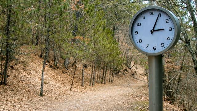 vídeos de stock e filmes b-roll de big clock in forest - climate clock