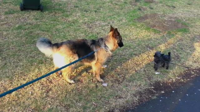 大きな犬と小さな犬が出会う。 - 愛玩犬点の映像素材/bロール