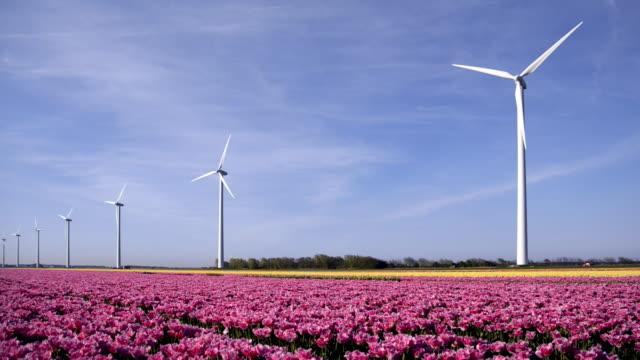 stockvideo's en b-roll-footage met grote nederlandse kleurrijke tulpenvelden met windturbines - floral line