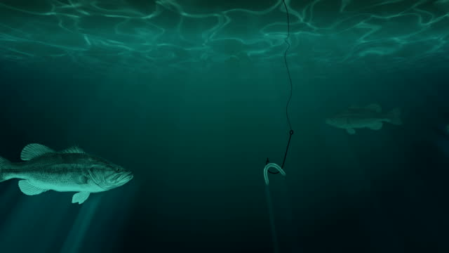 große fische und einen fisch haken mit köder unter wasser - fischköder stock-videos und b-roll-filmmaterial