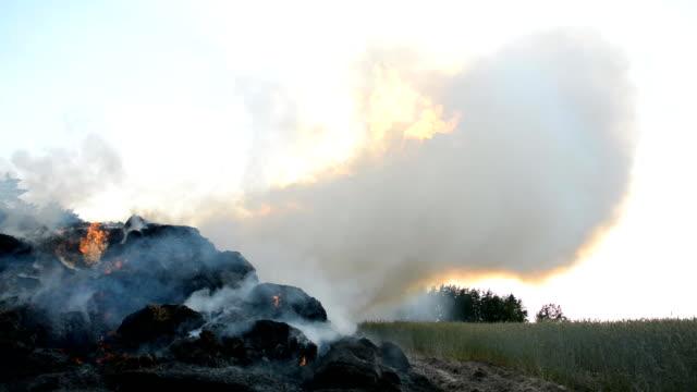 stor skördebrand - skalhylsa bildbanksvideor och videomaterial från bakom kulisserna