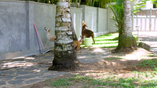 big homeless dogs bark standing against high concrete wall
