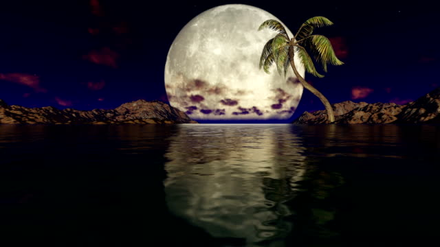 Big Moon and Coconut Tree on a calm night video